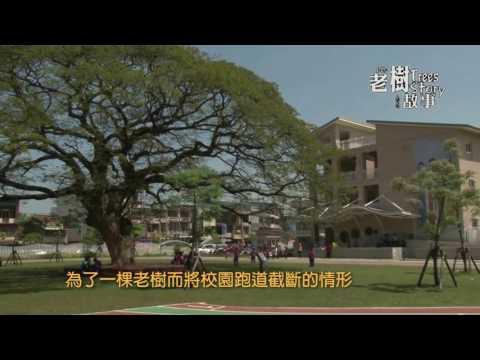 高雄市8棵百年老樹故事-雨豆樹(影片長度:3分22秒)