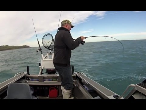 Fishing for Carrots! - Soft Plastic action on big Wellington Gurnard