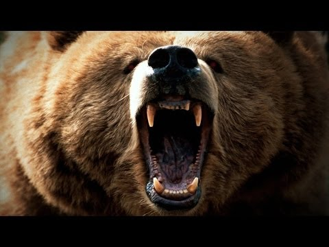 80 Year Old Man Fights Bear, Falls Off Cliff, SURVIVES!