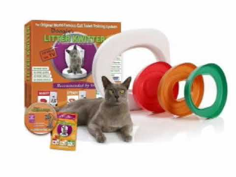 how to potty train a cat