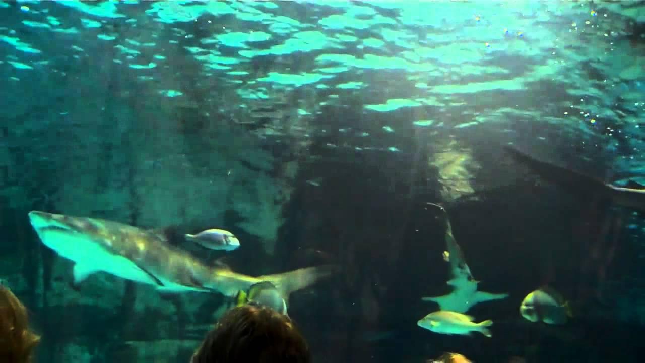 Newport Aquarium Newport Kentucky Shark Tank 8 12 12