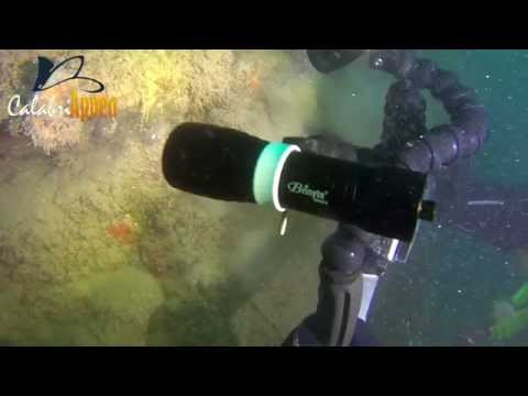 Brinyte DIV08V diving video flashlight in Italy