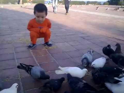 Đà nẵng Chim bồ câu làm du lịch