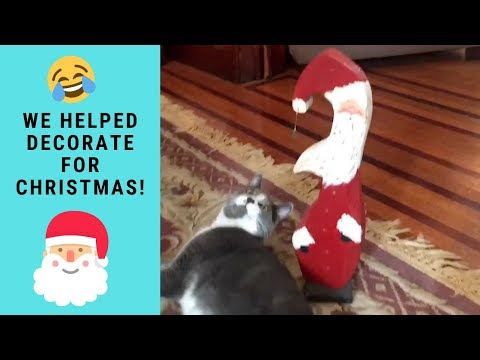 FUNNY CATS HELP DECORATE FOR CHRISTMAS | Cats Reaction to Christmas Decorations