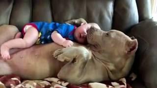 Big Nanny Dog