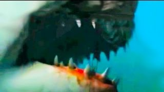 Shark Attack Video Caught On Tape Most Shocking Shark