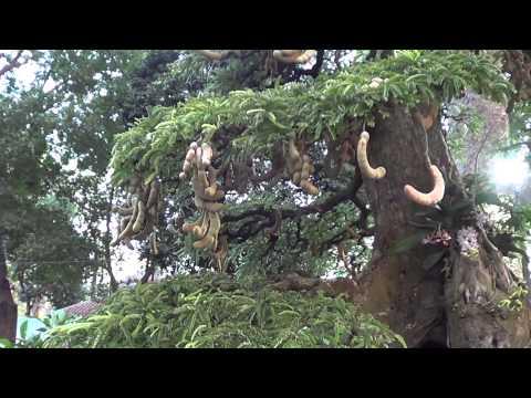 VIDEO: Lang thang Hội Hoa Xuân TP.HCM Tết Ất Mùi 2015 (Phần 4/4)