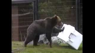Bear Resistant Cooler: Pelican ProGear Elite Cooler vs. Grizzly Bear
