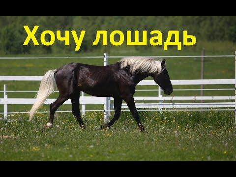 Подарите мне лошадку