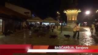 Damir Nikšić: Sebilj su okupirali psi lutalice, turistima ostaje prizor za safari