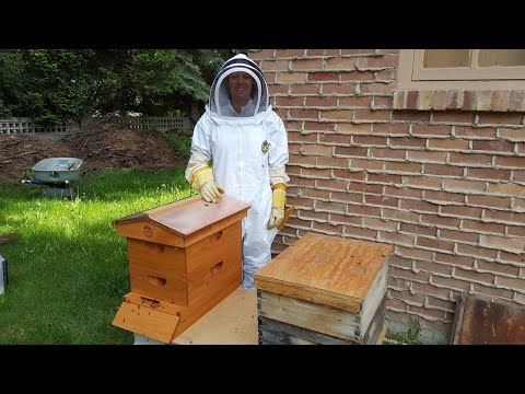 BEGINNING BEEKEEPING: Rachel's First Hive Inspection & Checkerboarding