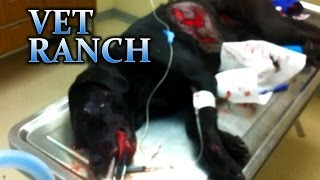Janie, Hit By A Car (GRAPHIC)