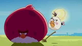 Angry Birds Toons # 13 - Zahrádka s Terencem