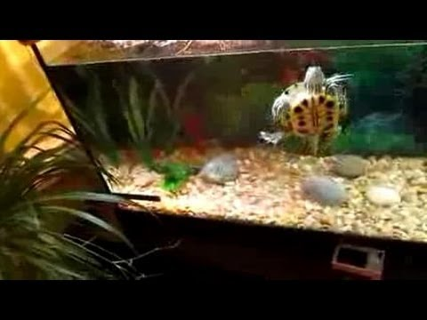Turtle Tank Filters - YouTube