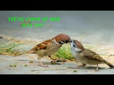 Tiếng chim mồi 2017 - Chim sẻ mồi hay - Âm thanh bẫy chim hay nhất \
