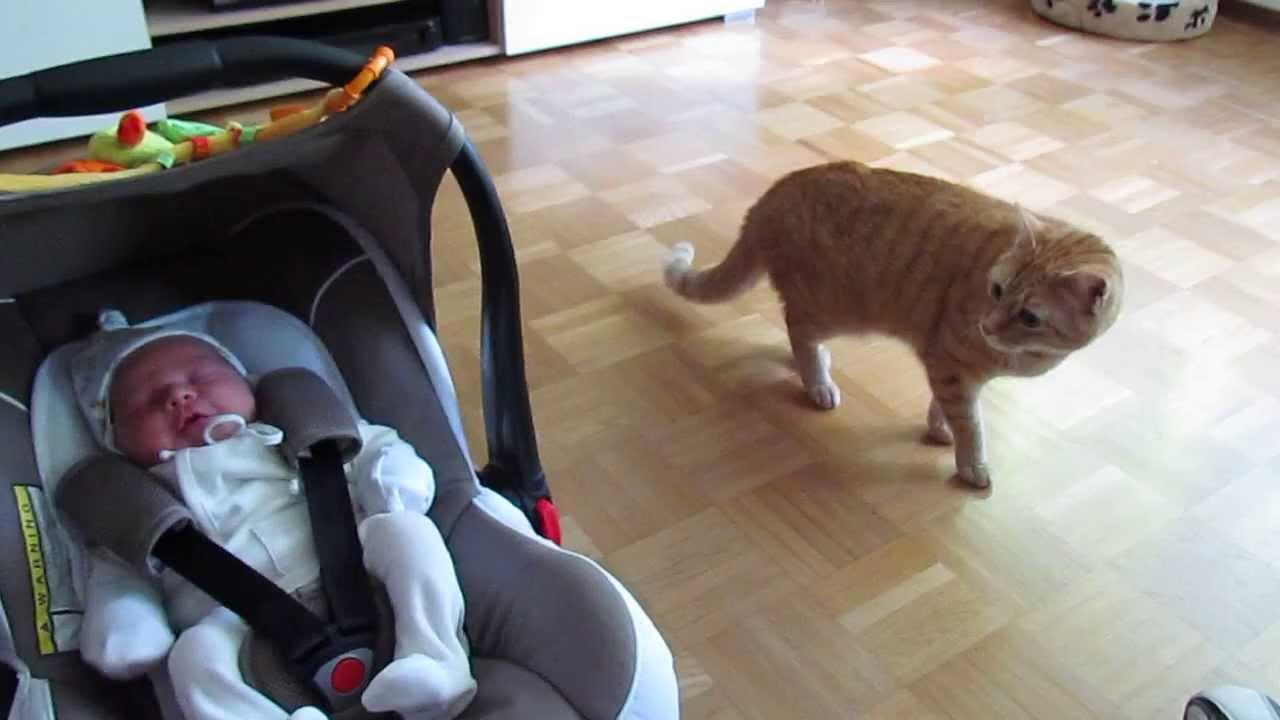 Un chat rencontre un bébé pour la première fois