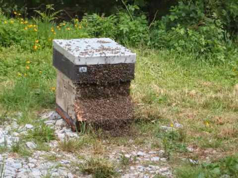 Beekeeping in Ireland