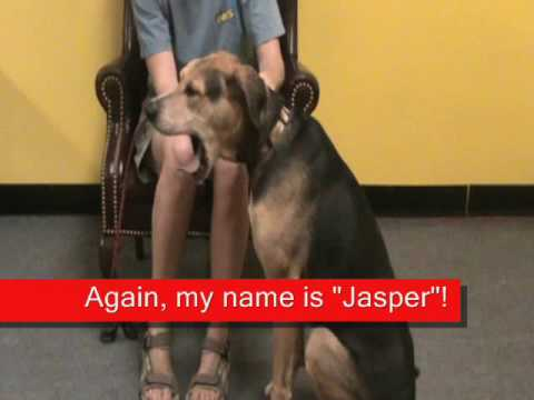Jasper - Dog for Adoption at Villa La PAWS on Shea, Phoenix, AZ