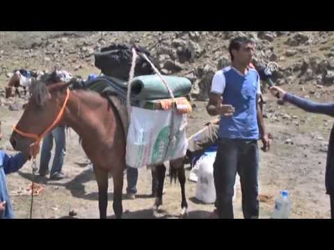 Anadolu Agency - Mules serving for tourism