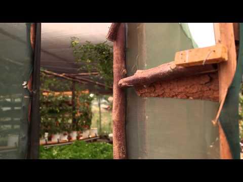 Agricultura hidropónica: Cómo cultivar plantas sin suelo en África