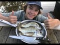 MONSTER Bream Catch n Cook Caught in CAST NET