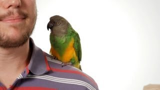 How To Potty Train Your Parrot Parrot Training