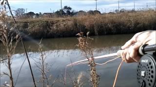 冬でも釣れるブルーギル