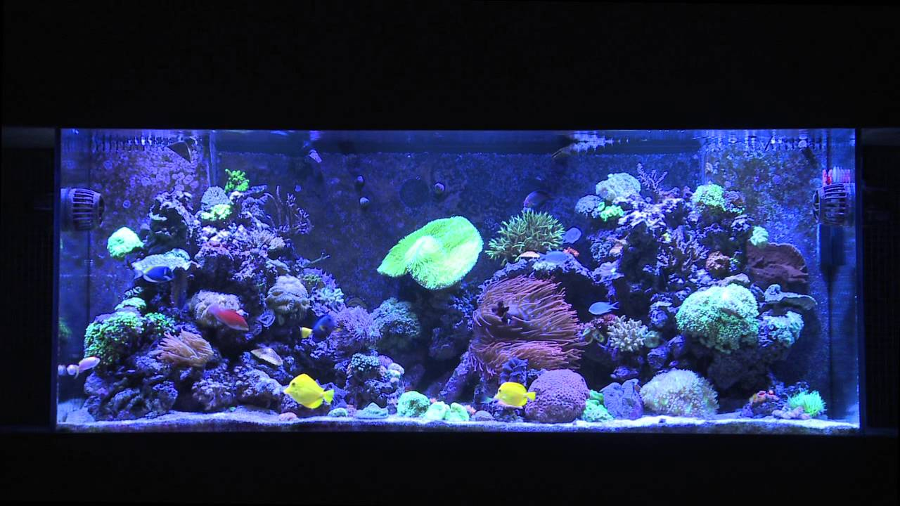 Mr saltwater tank 39 s 225 gallon vip tank 1 year update for Google fish tank mrdoob