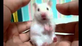 Surprised Mouse!!!!!!!