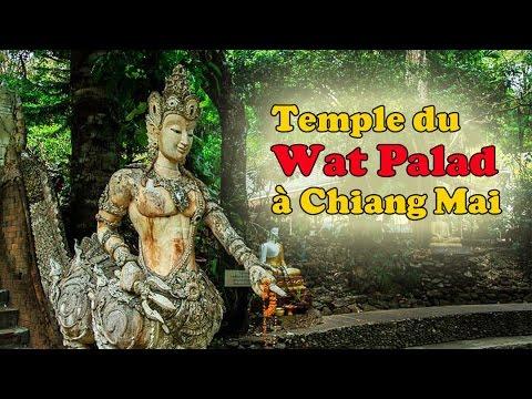 visiter le wat palad (chiang mai)
