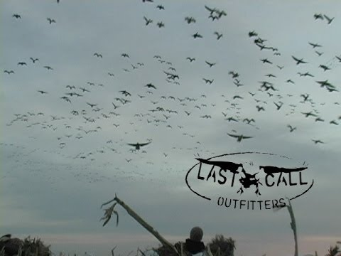 Spring Snow Goose hunting, South Dakota with LCO