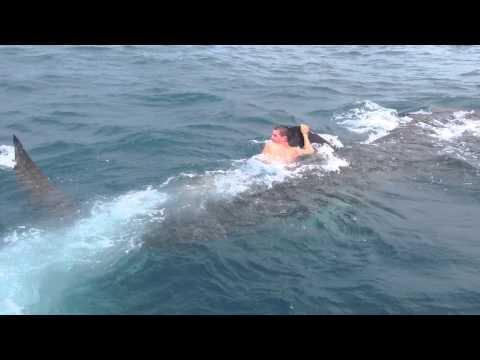 超猛釣客騎上鯨鯊!