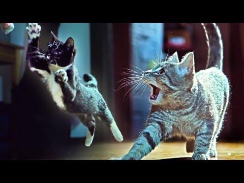"Kittens On The Beat, Download ""Wildstyle"" by Savant for free: https://soundcloud.com/aleksander-vinter Like Savant on Facebook: http://fb.com/savantdubstep Check out our Facebook..."