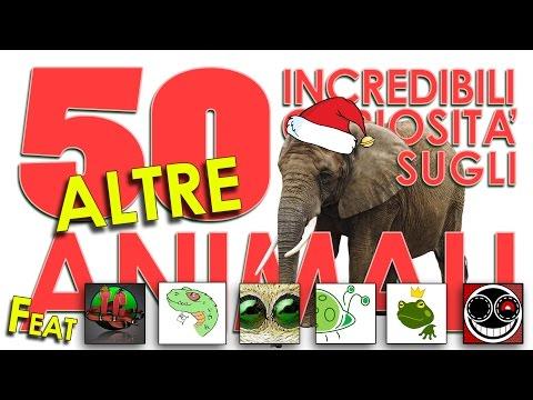 ALTRE 50 incredibili curiosità sugli animali
