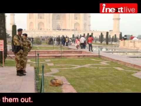 Beware of Dogs at Taj Mahal !
