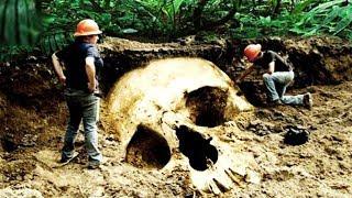 Những Phát Hiện Rợn Người Bên Trong Những Khu Rừng Bí Ẩn Nhất Thế Giới
