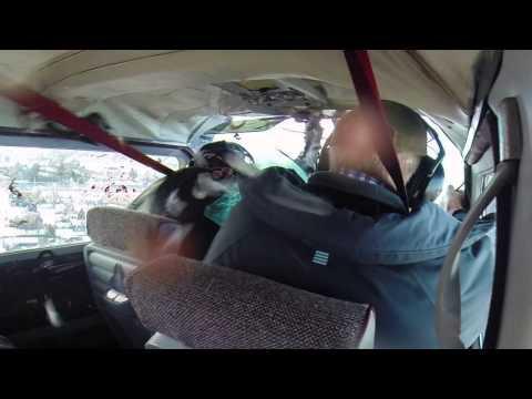 image vidéo Une oie est percutée par un avion