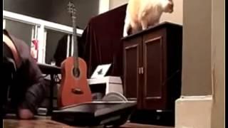 Con mèo mất dạy !!