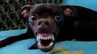 """Alien Dog """"Animal Instinct""""."""