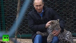 RT -  Putin enters leopard cage at Sochi National Park