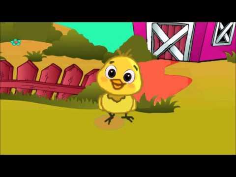 Mi Pollito Amarillito - Canciones Infantiles