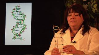 DNA Structure & Testing : What Is DNA Semi-Conservative