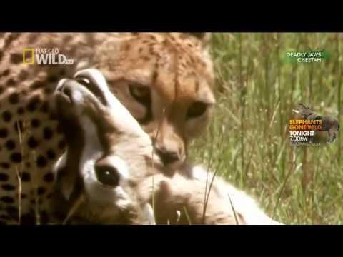 Bài Thực hành : Tập tính săn mồi của động vật