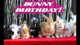 I THREW MY RABBIT A BIRTHDAY PARTY....AGAIN!