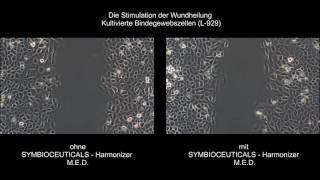 Wundheilung nach Symbio Harmoceuticals