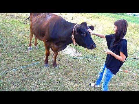 WE GOT A COW!!