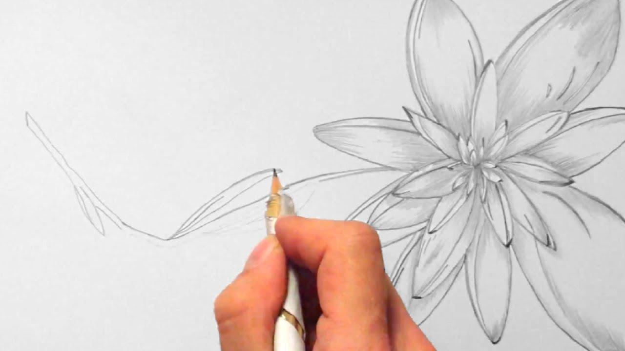 blume zeichnen im zeitraffer 02 flower drawing in fast. Black Bedroom Furniture Sets. Home Design Ideas