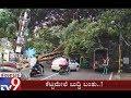 Public Appreciate Over Dangerous Tree Removal in Lalbagh