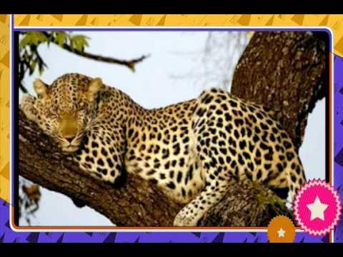 Bài giảng về động vật trong rừng cho trẻ mầm non.