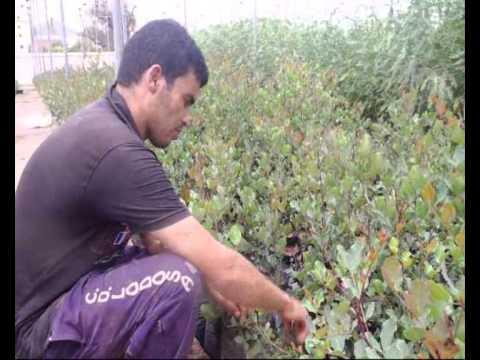 مشتل الحمري بوجدة محطة نموذجية لإنتاج الشتائل الغابوية
